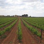 Valencia Wine Consulting & Tours